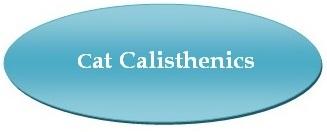 Broadlands / Ashburn, VA - Stream Valley Veterinary Hospital - Cat Calisthenics