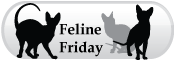 Broadlands / Ashburn, VA - Stream Valley Veterinary Hospital - Ask us about a Feline Friday appointment!
