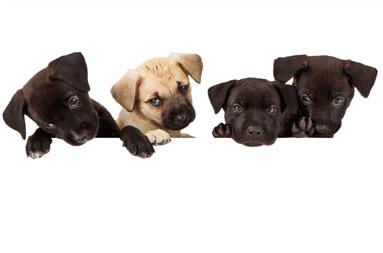 Broadlands / Ashburn, VA - Stream Valley Veterinary Hospital - Picking a Pet