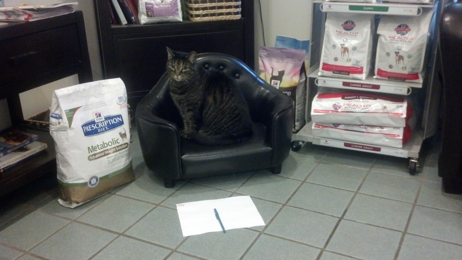 Broadlands / Ashburn, VA - Stream Valley Veterinary Hospital - Shadow is taking notes, and he's ready to answer your questions!